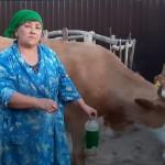 Неуязвимые клещи атаковали скот в Атырауской области