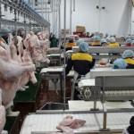Как построить бизнес на казахских деликатесах из индейки
