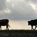 Актюбинские фермеры пожаловались на недоступность кредитов по программе «Еңбек»
