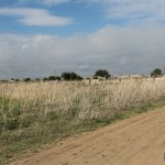 В Павлодарской области разрабатывают план борьбы с сорняком циклахеной