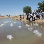 В Туркестанской области развивают рыбное хозяйство