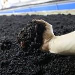 Калифорнийские черви из Павлодара помогут фермерам отказаться от химических удобрений