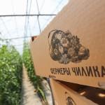 Егістіктен – сөреге: Шелек фермерлері супермаркеттерге көкөністер жеткізілімін бастады