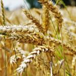 Семинар «Экспорт органической продукции» состоится в Костанае 25 июля