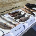 В Кызылординской области прошёл V слёт рыбаков Приаралья