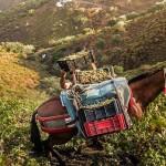 Объекты сельскохозяйственного наследия мирового значения в центре внимания ФАО