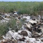 Проверить содержание скотомогильников призвали в Антикоррупционной службе РК