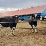 Ключ к успешному птицеводству и молочному животноводству