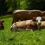 Казахстанский фермер уволил обычных пастухов и сильно на этом сэкономил