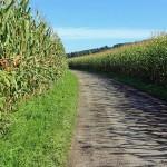 Фермеры Алматинской области винят поставщиков воды в гибели урожая