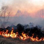 В Карагандинской области горящая степь грозит разорением местным фермерам