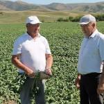 «От малого – до великого»: как в СЗЦ «Сырымбет» выращивают сахарную свёклу