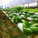 Выращивание салатов и зелени методом проточной гидропоники