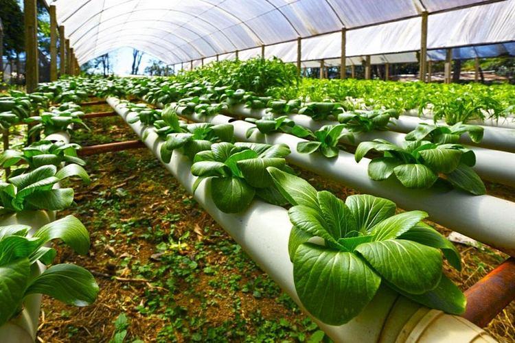 Фото: agrobilim.kz