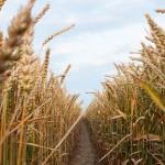 Казахстанец вывел на рынок инновационный агрогель