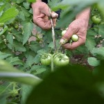 Страны Европы и Центральной Азии объединяют усилия для защиты здоровья растений
