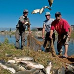 Устойчивое рыбоводство в интересах достижения ЦУР