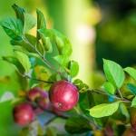Польский опыт садоводства перенимают туркестанские предприниматели