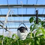 Bosch создал технологию для раннего обнаружения заболеваний растений