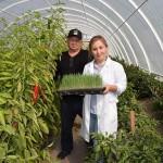 Фермеры Чилика осваивают новые методы органического земледелия