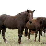 Семинар для сельхозпроизводителей, занятых коневодством, пройдёт 8 ноября в Акмолинской области