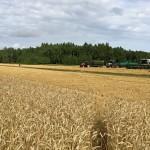 Секрет рекордного урожая