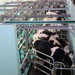 Беларусь построит опытную молочную ферму в Алматинской области
