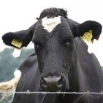 Почему казахстанские фермеры оказались на грани разорения