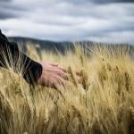 Евгений Ган – о нервозности на рынке зерна и сомнительной статистике