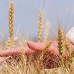 Костанайская область в числе лидеров по объёму инвестиций в сельское хозяйство