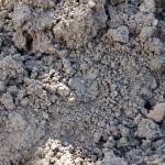 В Алматы участились кражи почвы
