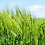 О необходимости развития органического сельского хозяйства в РК рассказал эксперт