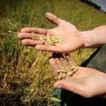 В Казахстане отменят обязательное страхование в сельском хозяйстве