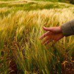 Как реализуется Послание Президента РК в сфере высшего аграрного образования