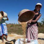 Цены на продовольствие в мире существенно выросли в ноябре