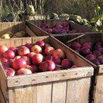 Минсельхоз планирует отказаться от импорта молока, мяса птицы и яблок к 2024 году