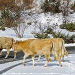 Фермерам Алматинской области не хватает пастбищ
