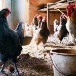 Особенности занятия подсобным хозяйством на селе: как это действует в Казахстане