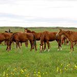 Сколько скота в Казахстане