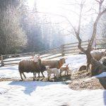 Чужой скот на два миллиона тенге продал пастух в Туркестанской области