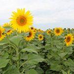 Утратил силу Закон РК «Об обязательном страховании в растениеводстве»