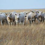 Какие именно законы РК нарушаются Товариществом при выпасе собственного поголовья скота на собственном же пастбище, но расположенном в соседнем районе одной и той же областной административно-территориальной единицы РК?