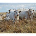 Какие существуют источники информации о наличии свободных земель сельхозназначения в РК?