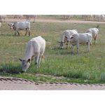 Мы хотим взять кредит на развитие животноводства. Как это сделать и с чего начать?