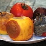 Какие заплесневелые продукты можно есть?