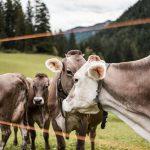Большинство фермеров отрезаны от госсубсидий – эксперт