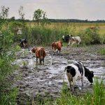 Атырауские фермеры бьют тревогу, им нечем поить скот