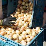 «Закупочный союз позволит сократить затраты на поставщиков»