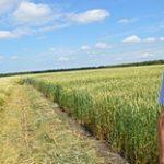В Казахстане агрономы и технологи на вес золота – итоги опроса