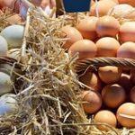 Те же яйца, только без субсидий